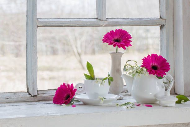 pink and white flowers on window sill