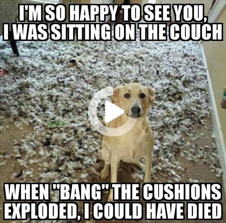 20 Random Animal Memes That Will Brighten Up Your Day Funny Dog Memes Happy Dogs Funny Animal Memes
