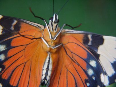 Sheffield's Tropical Butterfly House, Wildlife And Falconry Centre, 8th October 2016