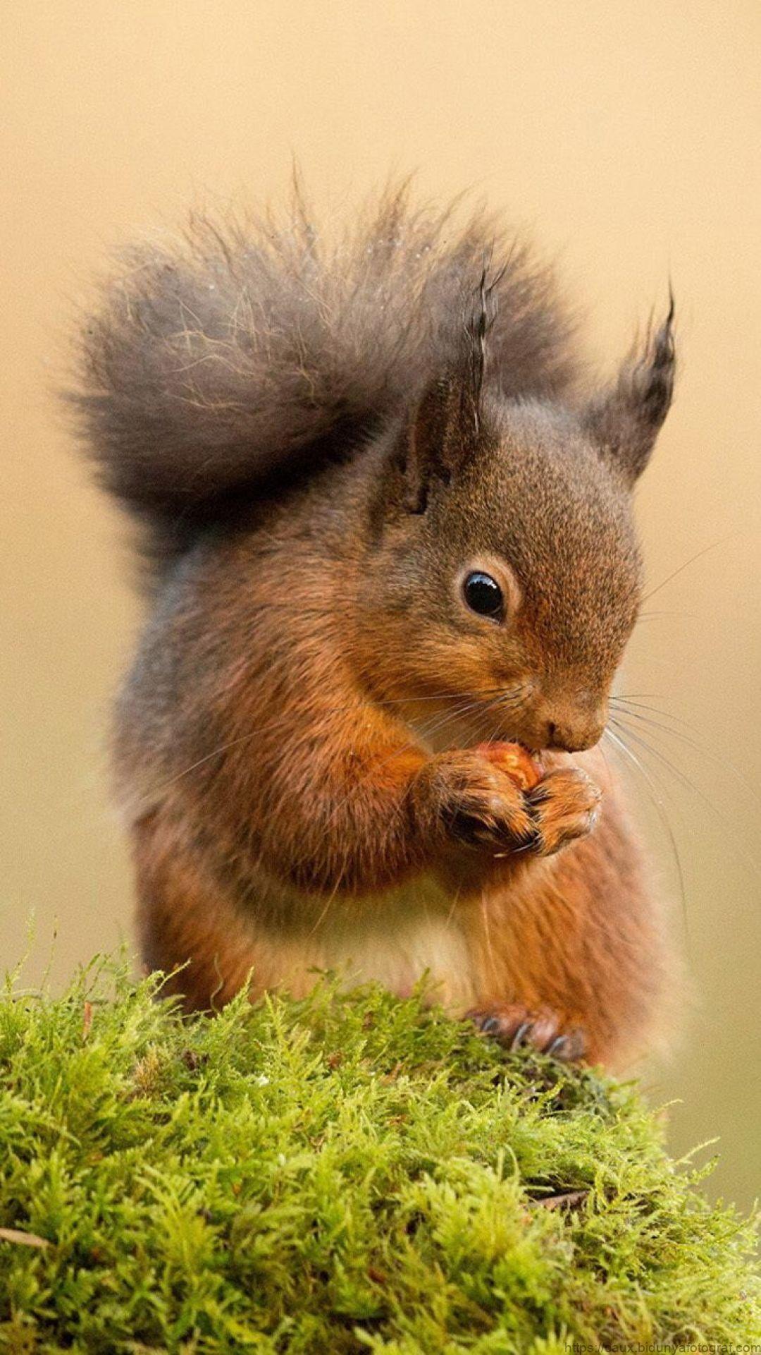 3100+ Animals / Birds Images, HD Photos (1080p ...