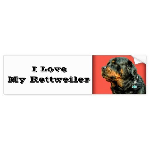 Make your car a reflection of you! Get your point across with this quality bumper sticker that will outlast heavy rain, intense sunlight, and the most severe of traffic jams.  #rottweiler, #rottie, #dog, #pet, family