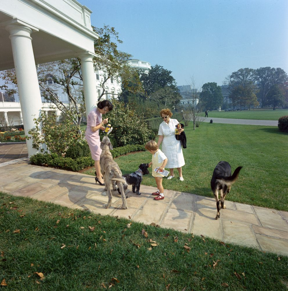 ST-C363-6-63. John F. Kennedy, Jr. with Family Dogs Clipper, Shannon ...