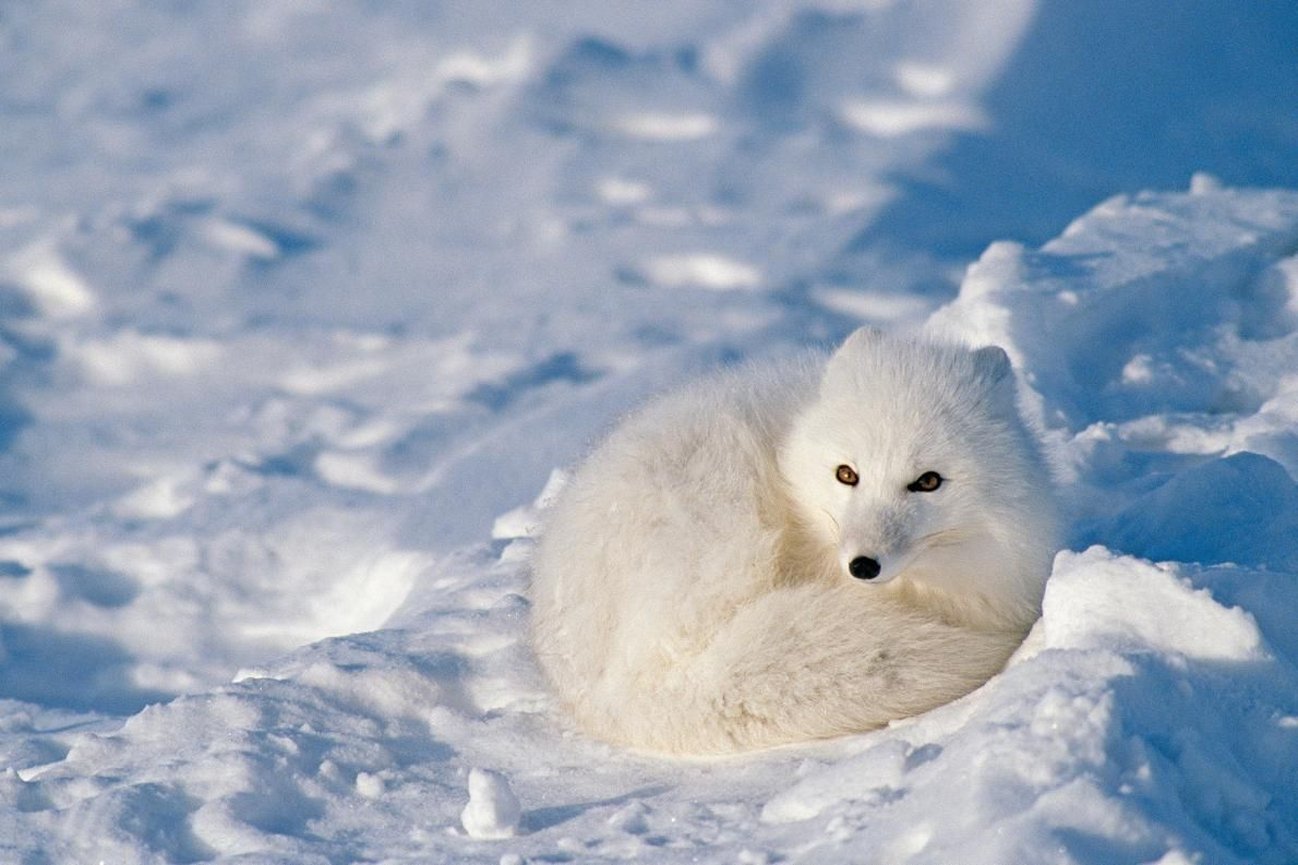 10+ Animals that live in the cold ideas
