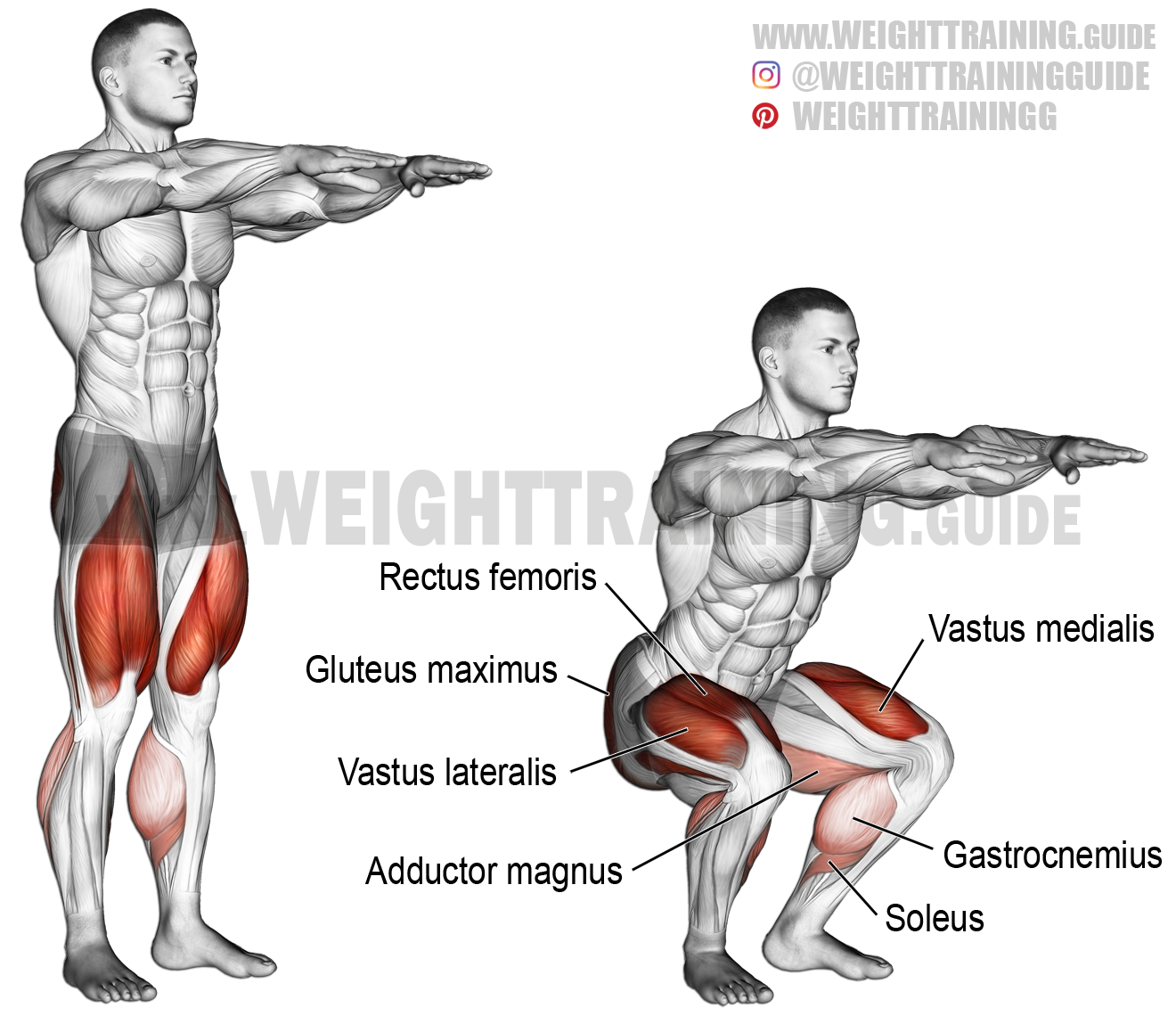 Bodyweight squat exercise instructions and video | Weight Training Guide | Squat  workout, Bodyweight workout, Squats