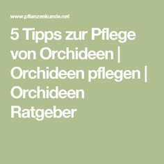5 tips to care for orchids 5 Tipps zur Pflege von Orchideen        for