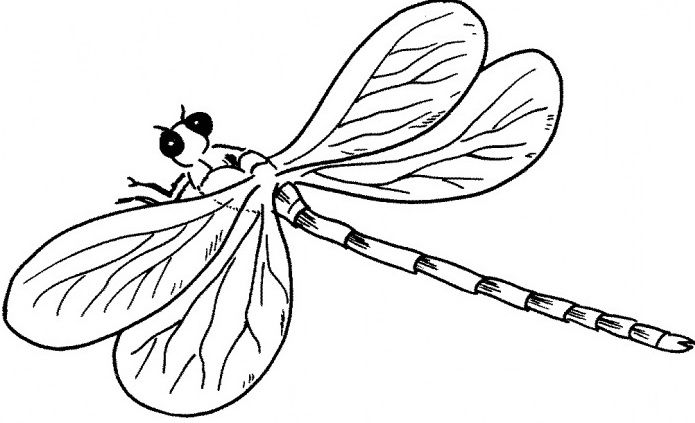 Pictures A Young Dragonfly Coloring Dragonfly Cartoon Coloring Pages Coloring Pages Bird Coloring Pages Dragonfly