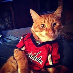 Washington Capitals Hockey Cat