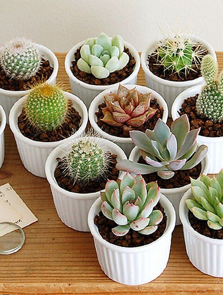 Small Cactus Succulent Decoration Ideas