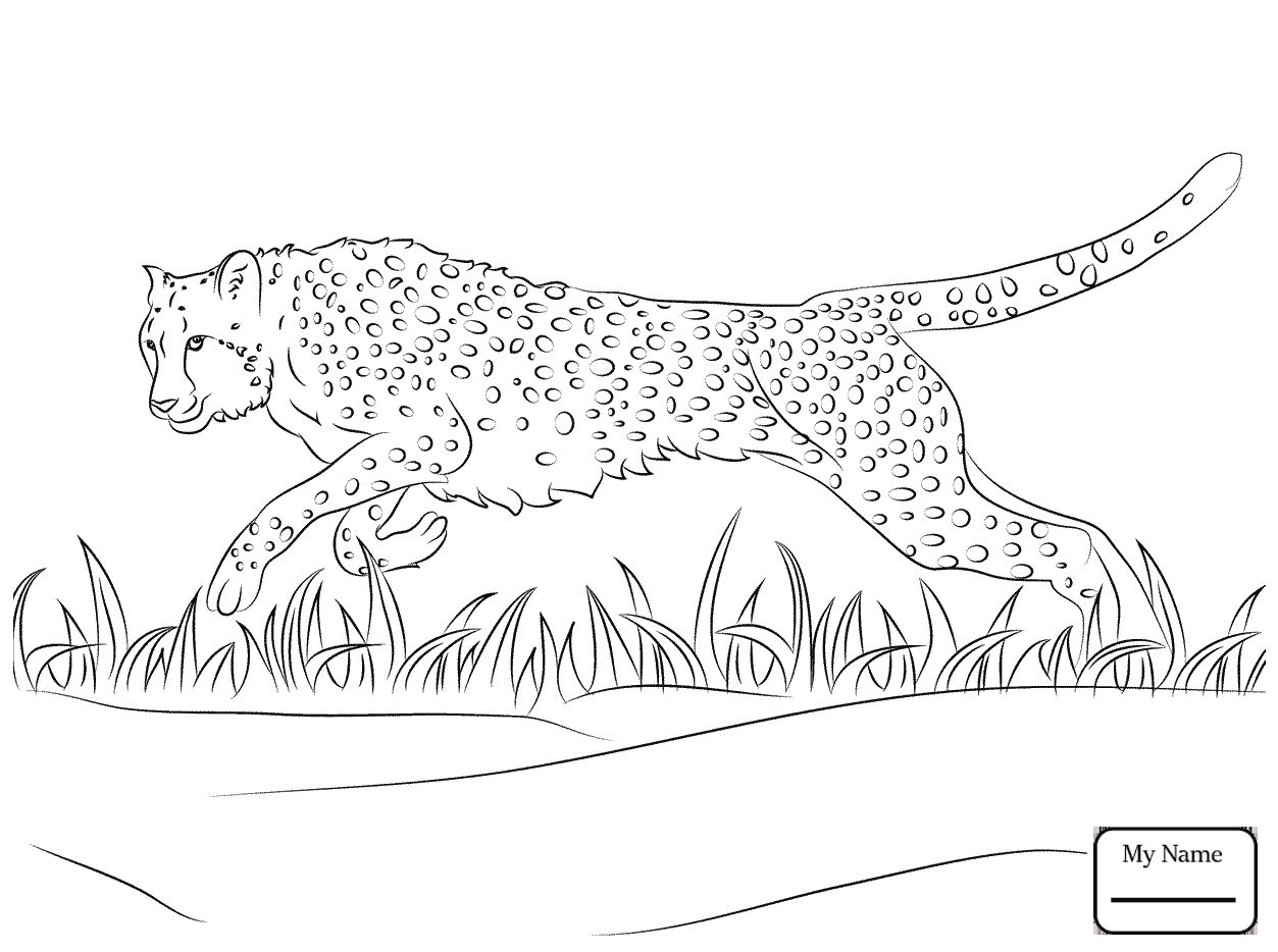 Cheetah Running Coloring Pages Download Animal Coloring Pages Coloring Pages Coloring For Kids