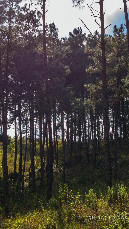 Forest Barapani Meghalaya Photography 4k Ultra Hd Mobile Wallpaper Photography 4k Photography Wallpaper Wallpaper