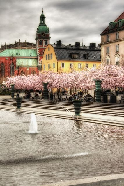 Stockholm. Cherry trees at Kungsträdgården. Estocolmo. Cerezos en Kungsträdgården Photo by J. A. A. #Relax more with healing sounds: