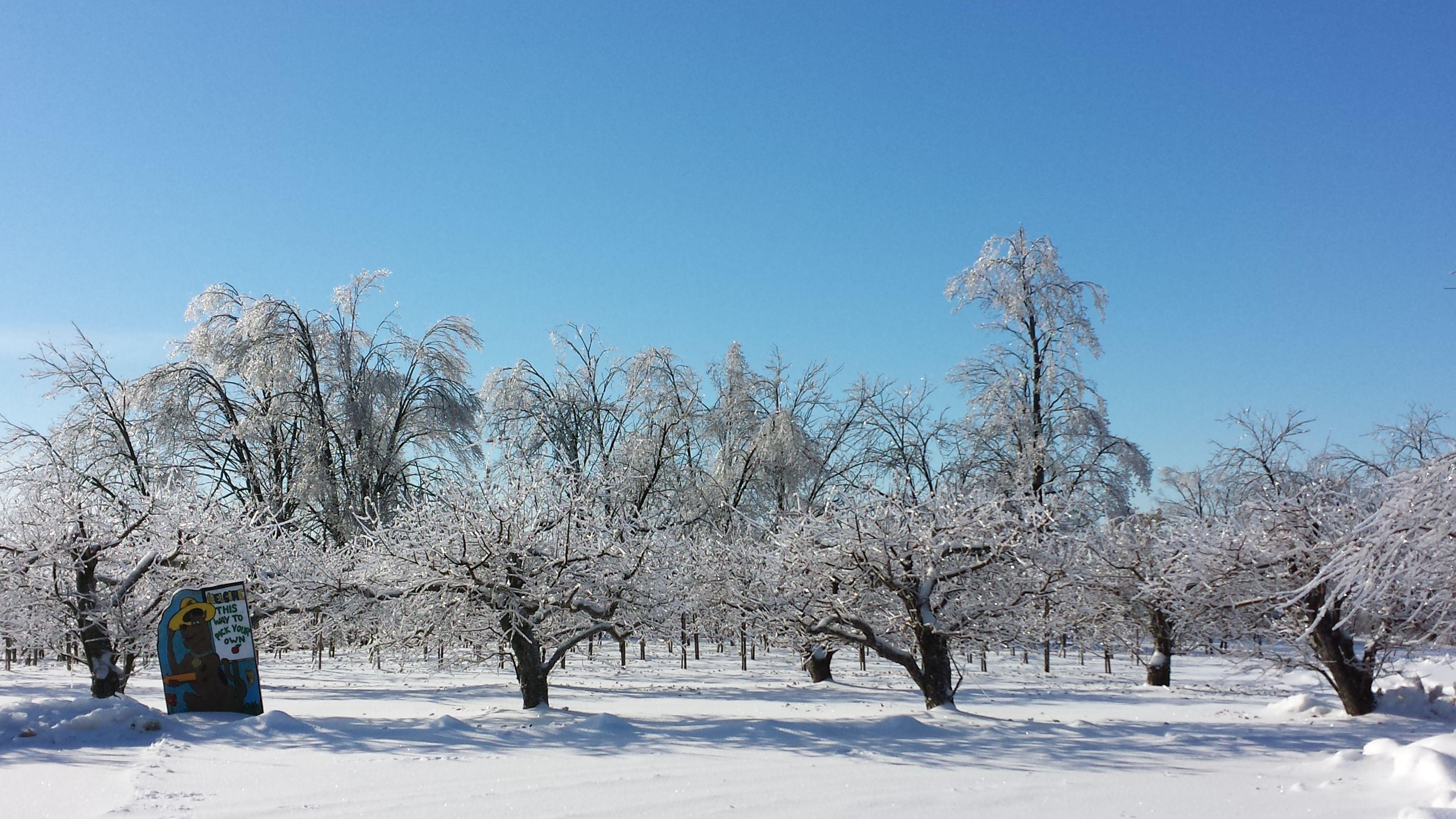 Blue Sky over Icy Farm