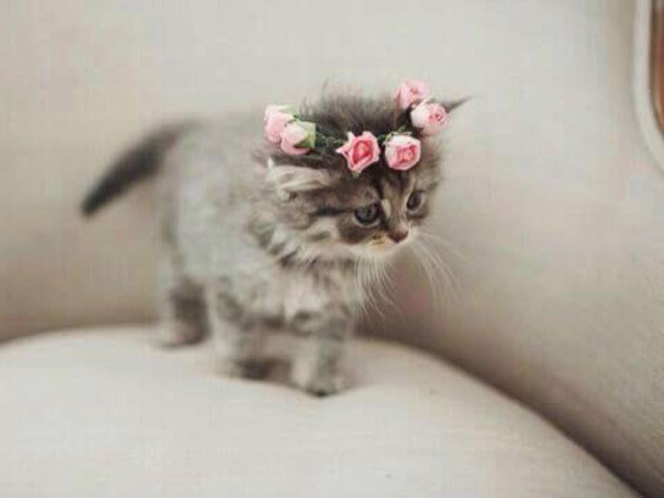 A Sweetheart Of A Kitten Wearing Sweetheart Roses Una Hermosura