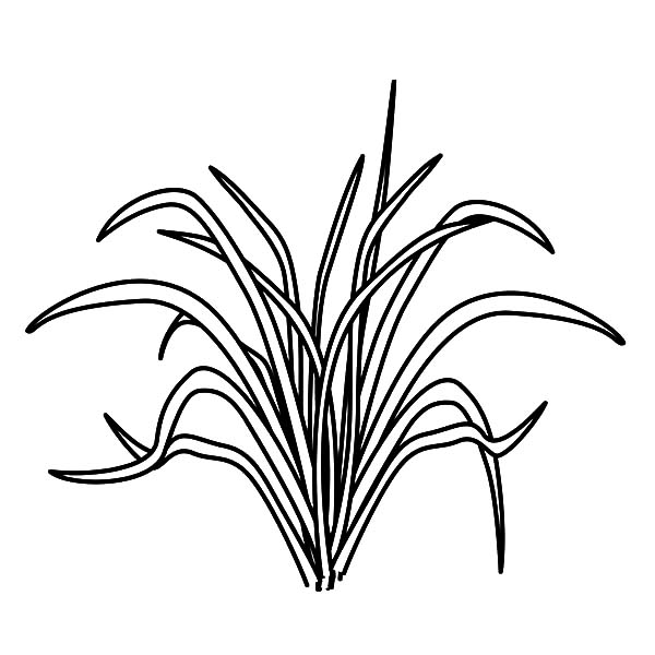 Picture Of Grass Coloring Pages Color Luna Grass Drawing Coloring Pages Color