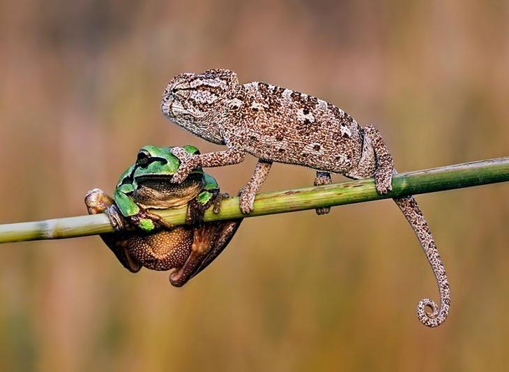 100 лучших фото без фотошопа | Смешные морды животных ...