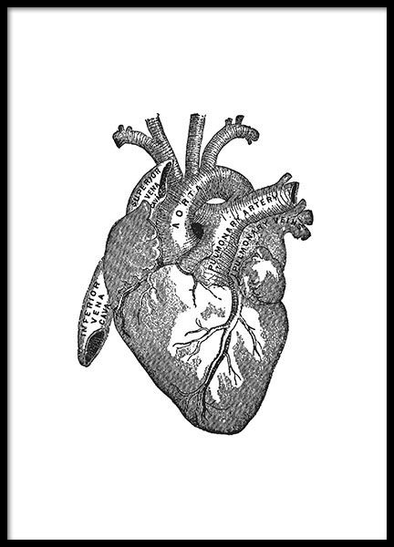Plakater Posters Plakat Poster Desenio No Heart Anatomy Black And White Posters Heart Art Print