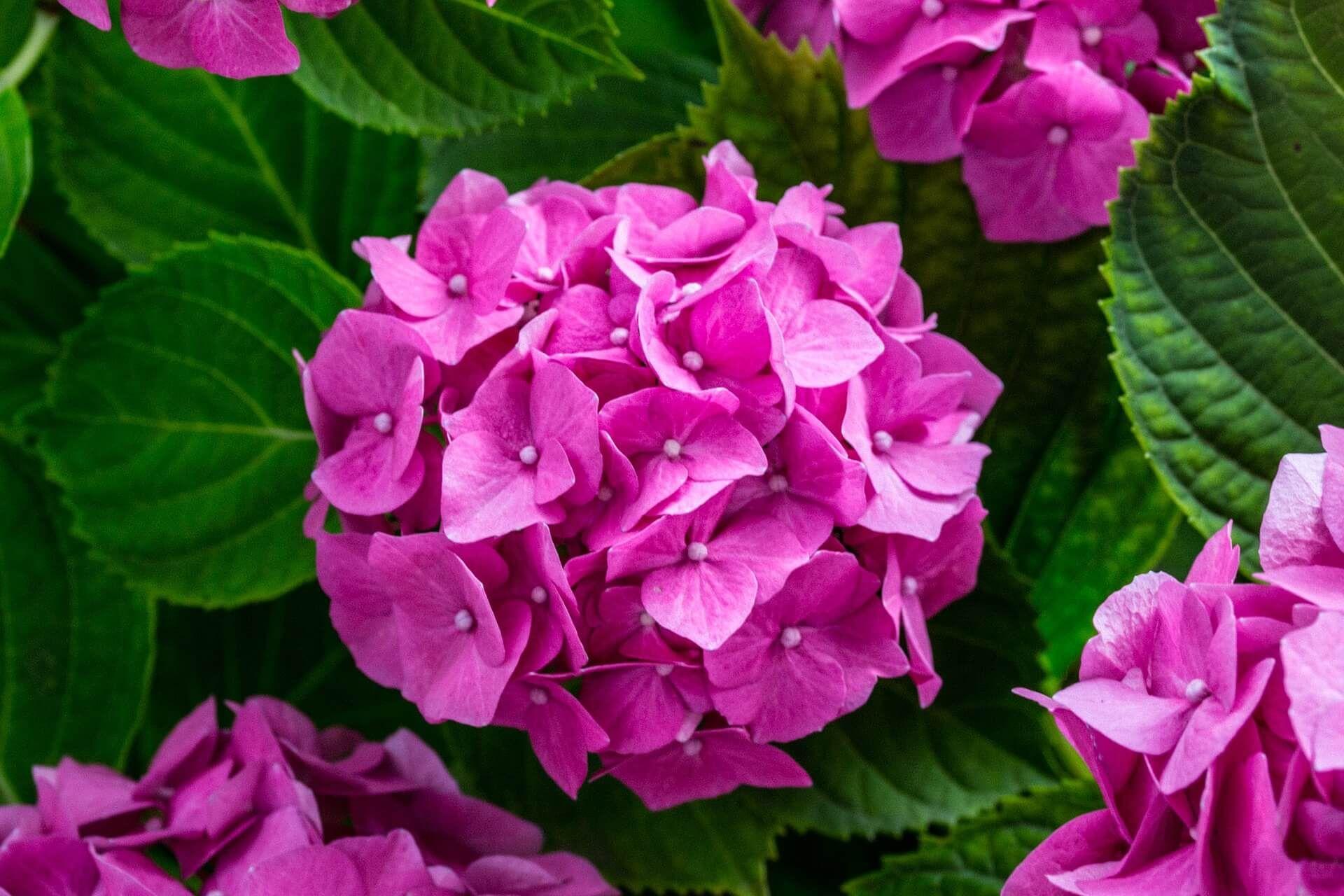 En Güzel çiçek Resimleri Güzel çiçekler