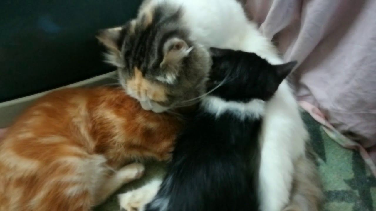Kitties Wants Mom Breastfeeding Milk Milk Production Breastfeeding Breastfeeding Moms Kitty