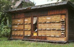 images about Bee Houses on Pinterest   Bee House  Beekeeping       images about Bee Houses on Pinterest   Bee House  Beekeeping Supplies and Eastern Europe