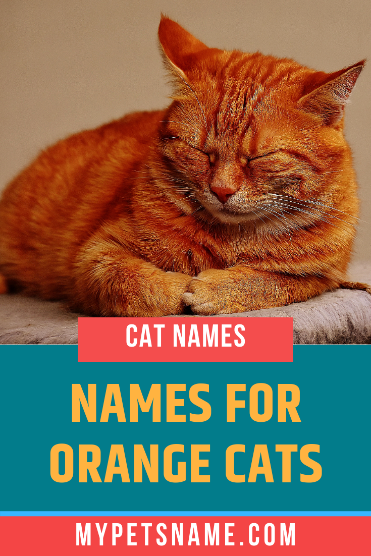 Cats The Color Of Bright Sunshine Can Be Incredibly Warm Cheerful And Loving Who Wouldn T Want To Wake Up To Cuddles From Orange Cats Orange Tabby Cats Cats