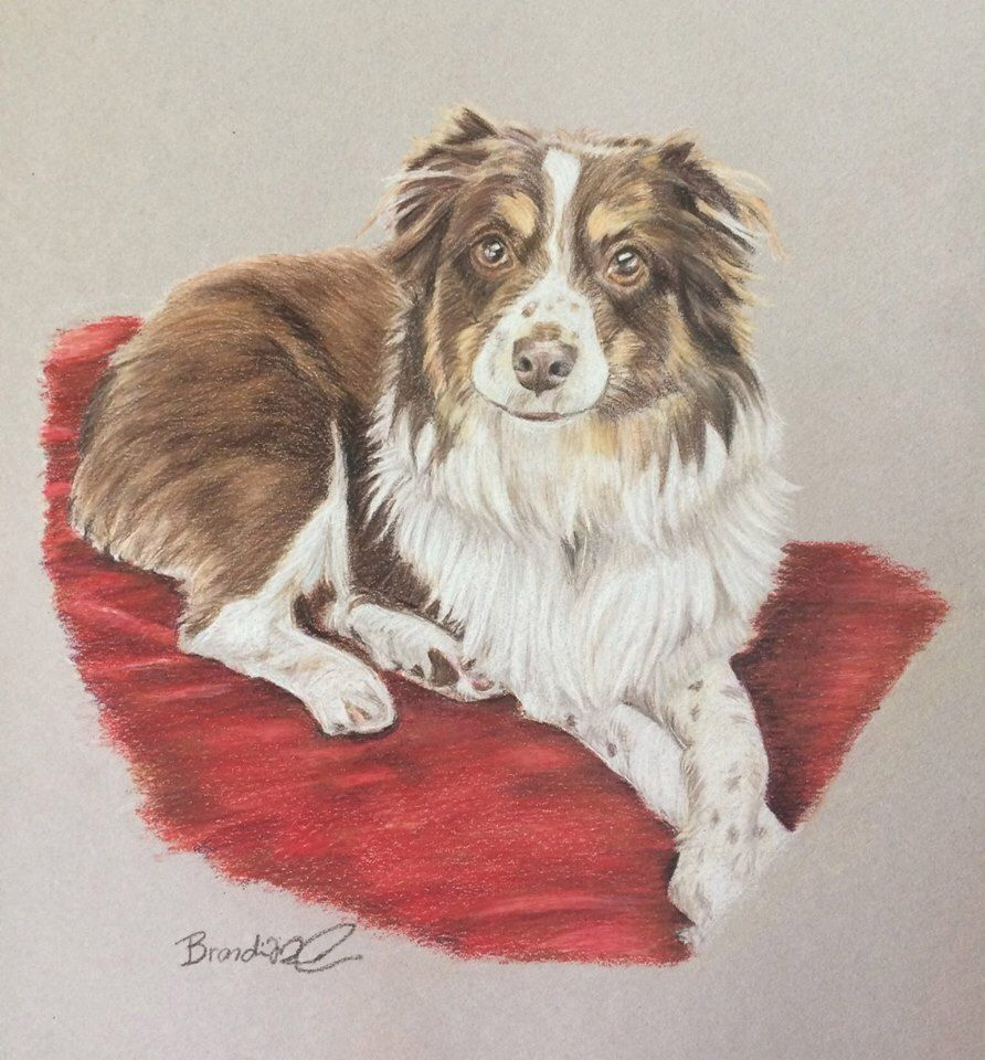 Original Drawing Of Your Dog Custom Pet Portrait Colored Pencil Dog Drawing Mini Aussie Australian Shepherd Dog Art Dog Drawing Dog Art Custom Pet Portraits