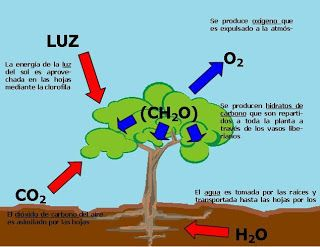 Procesos Celulares Gaming Logos Science And Nature Chemistry