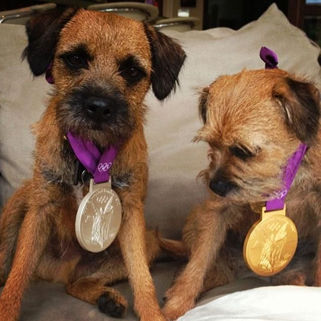 Best use of medals during the Olympics - Andy Murray's dogs show off his medals! #TeamGB