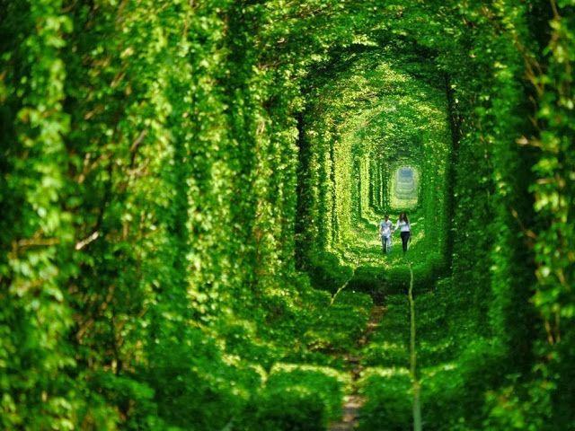 33 Gambar Tempat Terbengkalai Paling Cantik Di Dunia Dunia Tempat Pohon