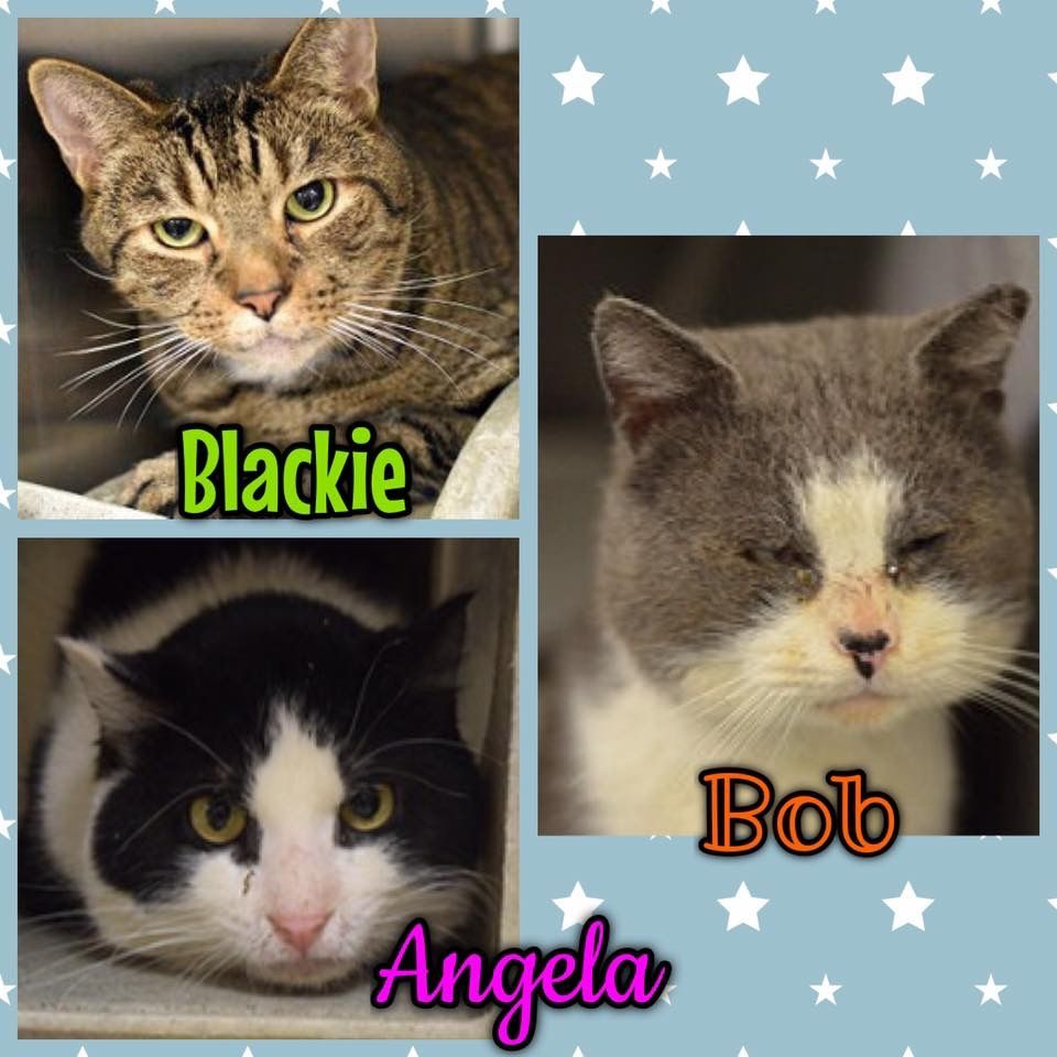 URGENT! These THREE great cats must escape ACCT by 8pm TONIGHT if they are to LIVE! Mail lifesaving@acctphilly.org to RESCUE ADOPT PLEDGE!