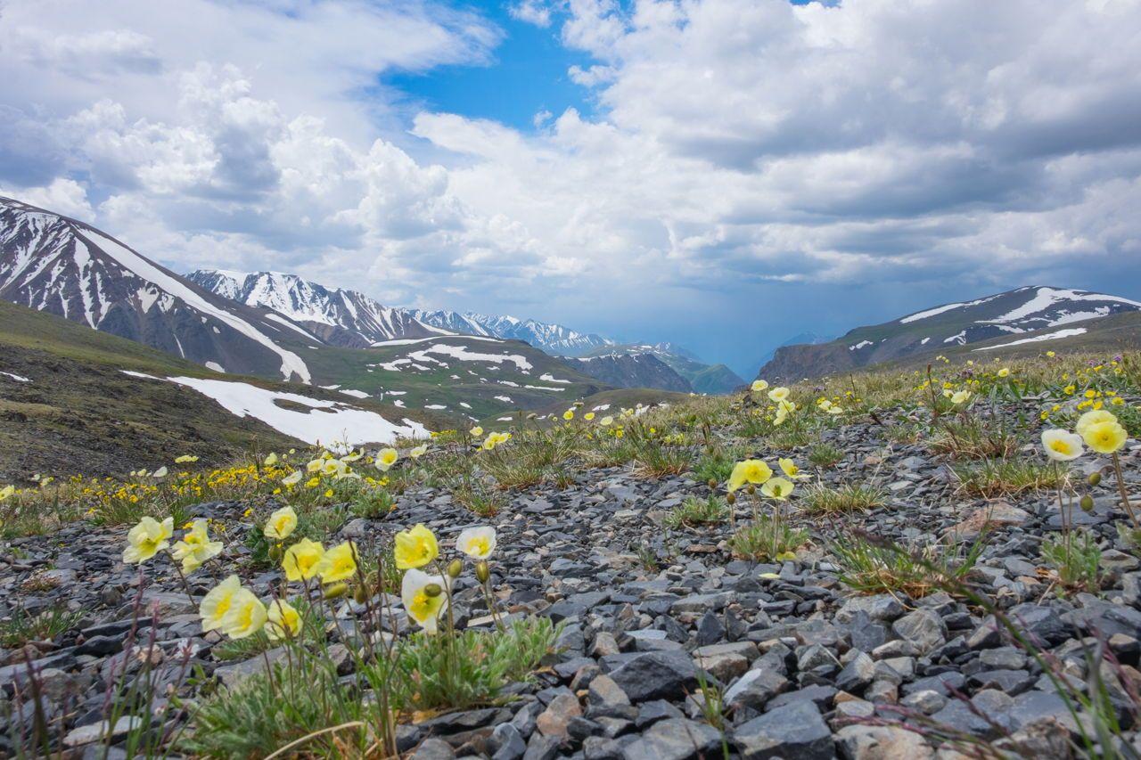 Arctic Tundra Plants in 2019 Arctic tundra, Arctic, Biomes