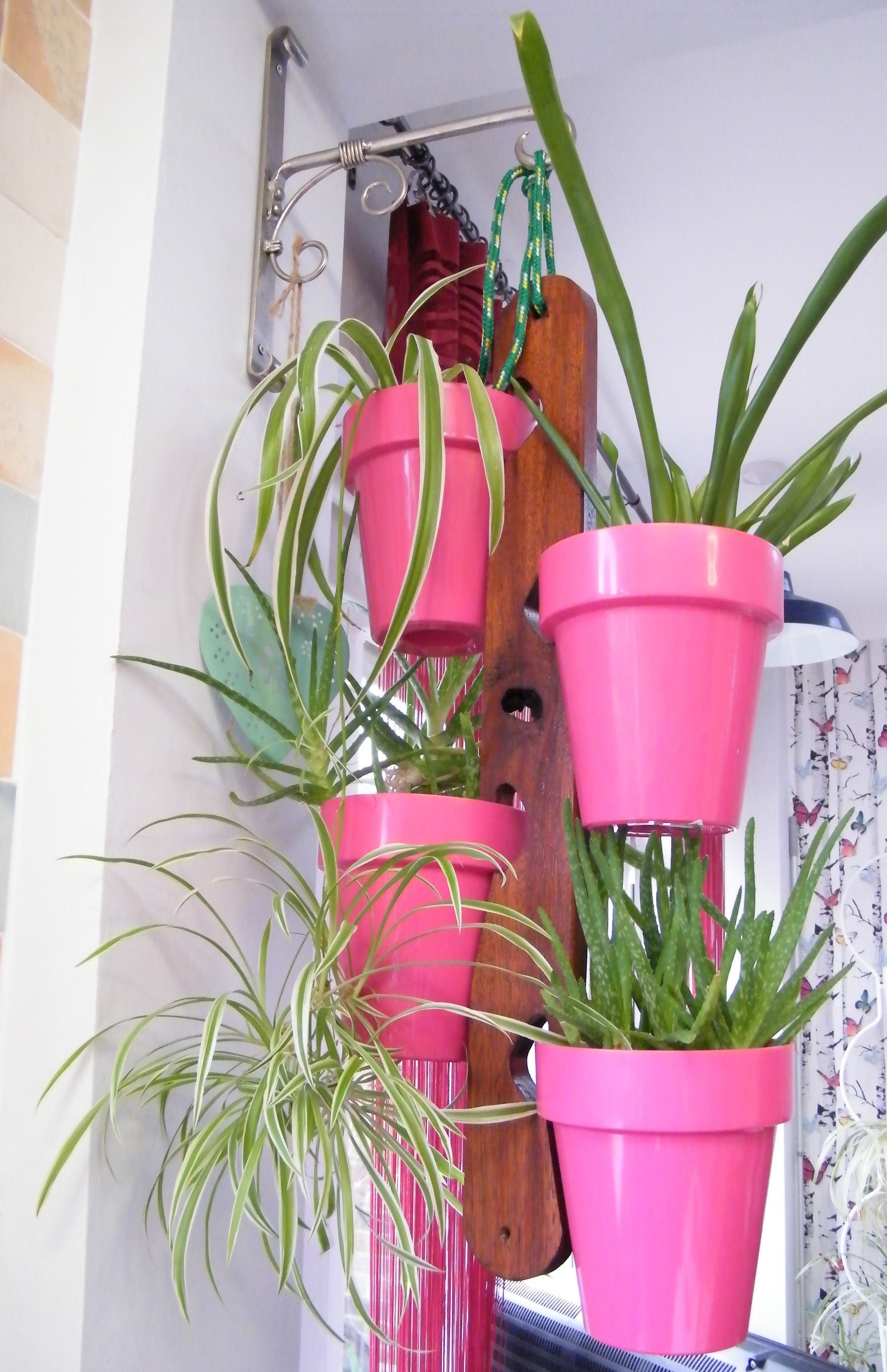 Pic: Funky Pink Fiori Porto Planters with spider plants create a hanging garden that brightens this flat. From the balcony garden board