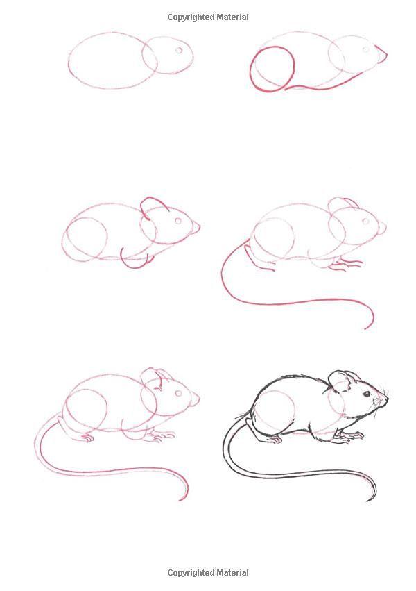 Paso a paso. Dibujar un ratón | Bocetos y dibujos | Pinterest ...