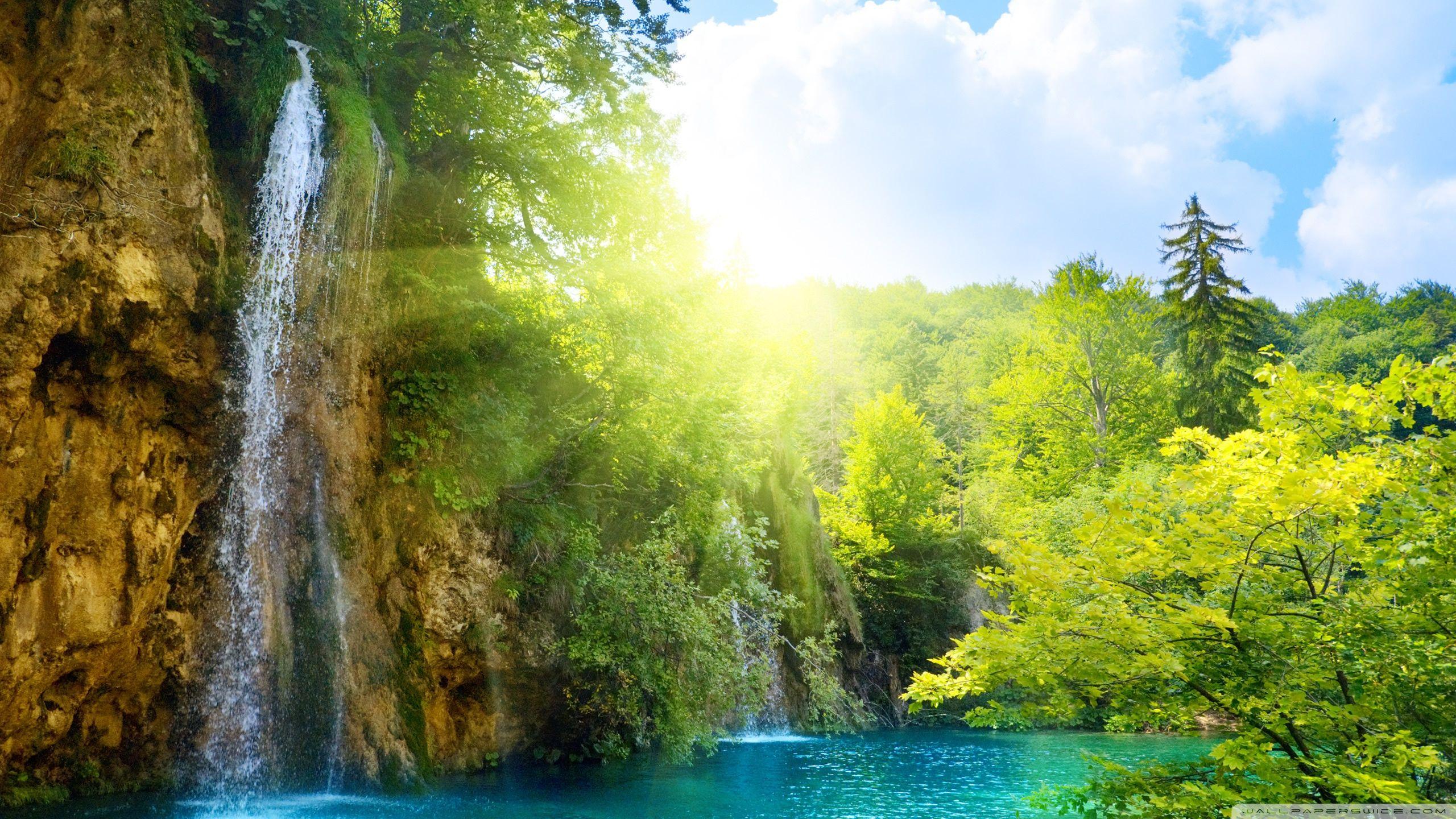 Forest Falls Wallpaper 2560x1440 Waterfall Wallpaper Waterfall Nature