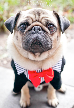Such A Nugget Cute Pugs Pug Dog Pugs