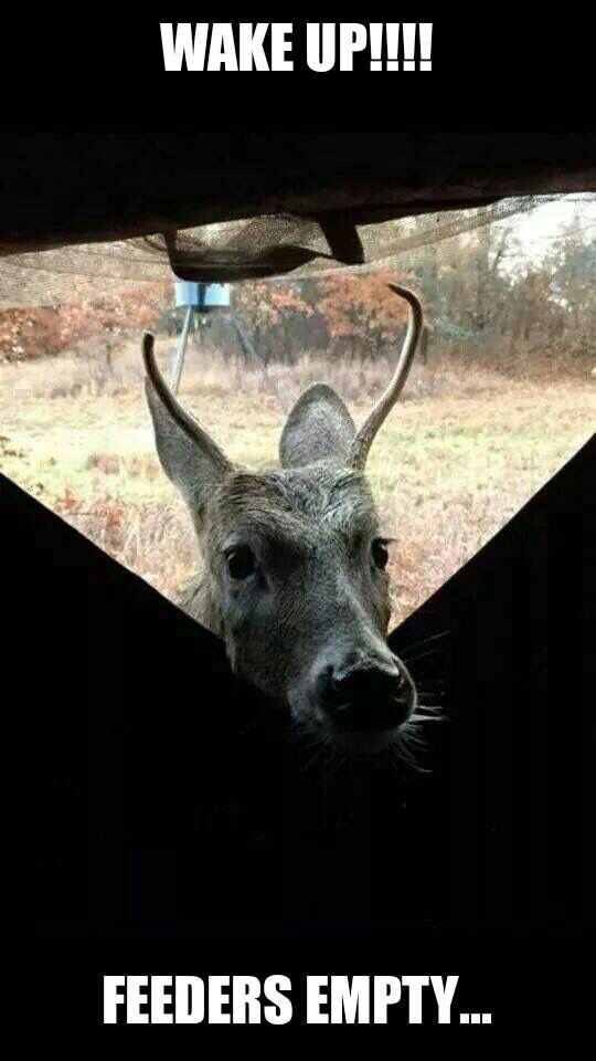 ca613e3fb0 Sleeping at the deer blind 😂 something similar happened to us yesterday.