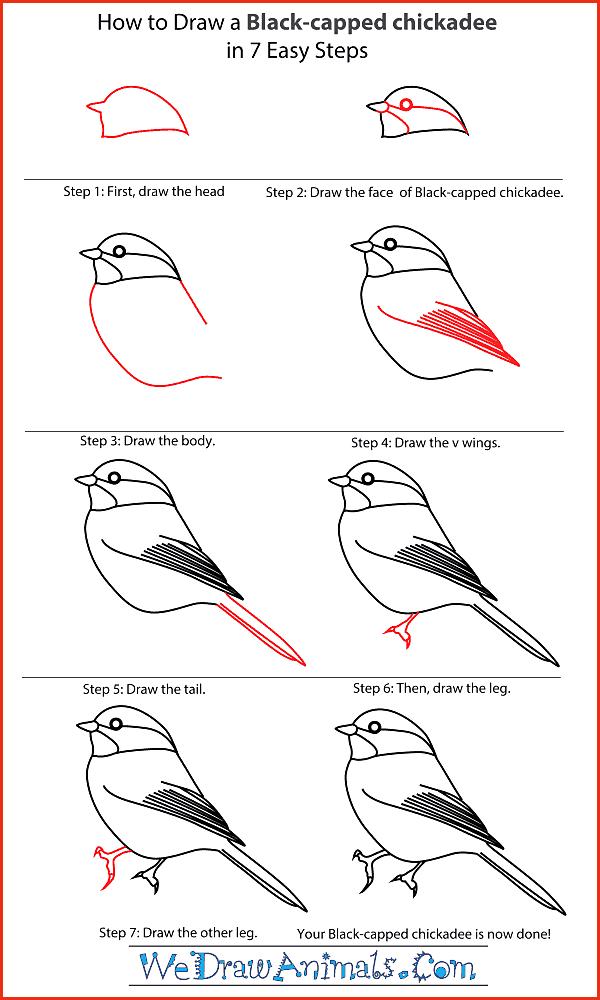 Wie zeichnet man einfache Tiere Schritt für Schritt Image ...