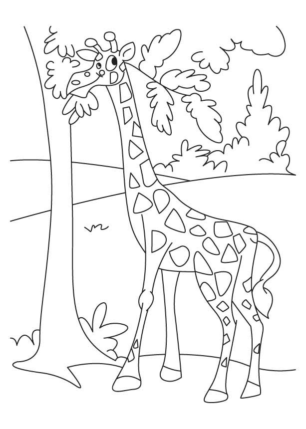 Giraffe Enjoying Leaves Coloring Pages Download Free Giraffe Enjoying Leaves Coloring Pages For Kids Best Co Leaf Coloring Page Zoo Animal Art Leaf Artwork