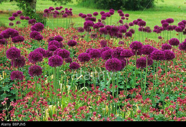 Piet Oudolf Plant List Google Search Prairie Planting 400 x 300