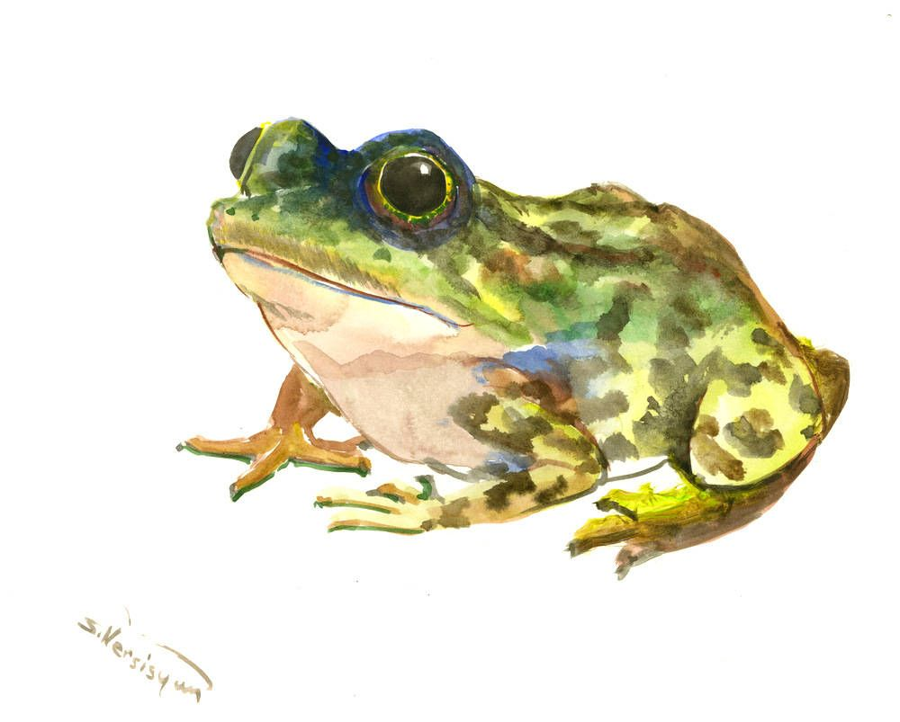 Green Frog Illustration, one of a kind original frog artwork frog ...