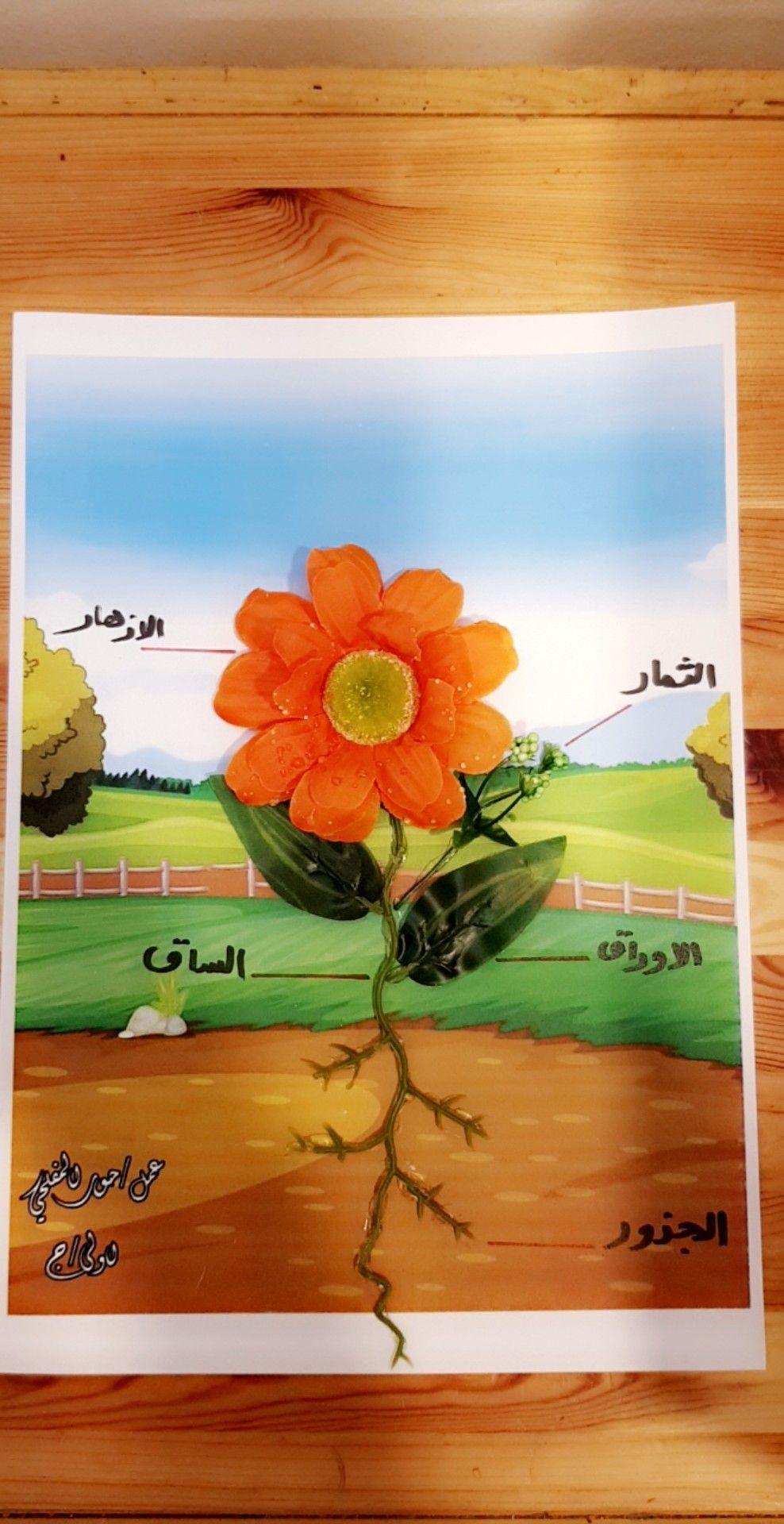 مطوية أجزاء النبات Shape Activities Preschool Cute Wallpapers Shapes Activities