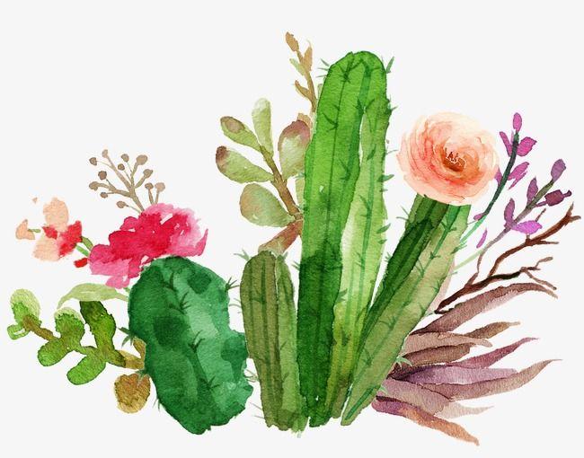 Cactus Flowers Watercolor, Watercolor Clipart, Watercolor Cactus ...