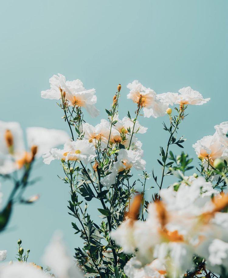 ☆P I N T E R E S T : @ellemartinez99☆ #flowersbackgroundiphone