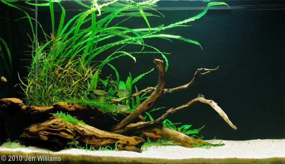 Blue Eye Island By Jen Williams 10 Gallons Aquascape Aquascape Aquarium Betta Aquarium