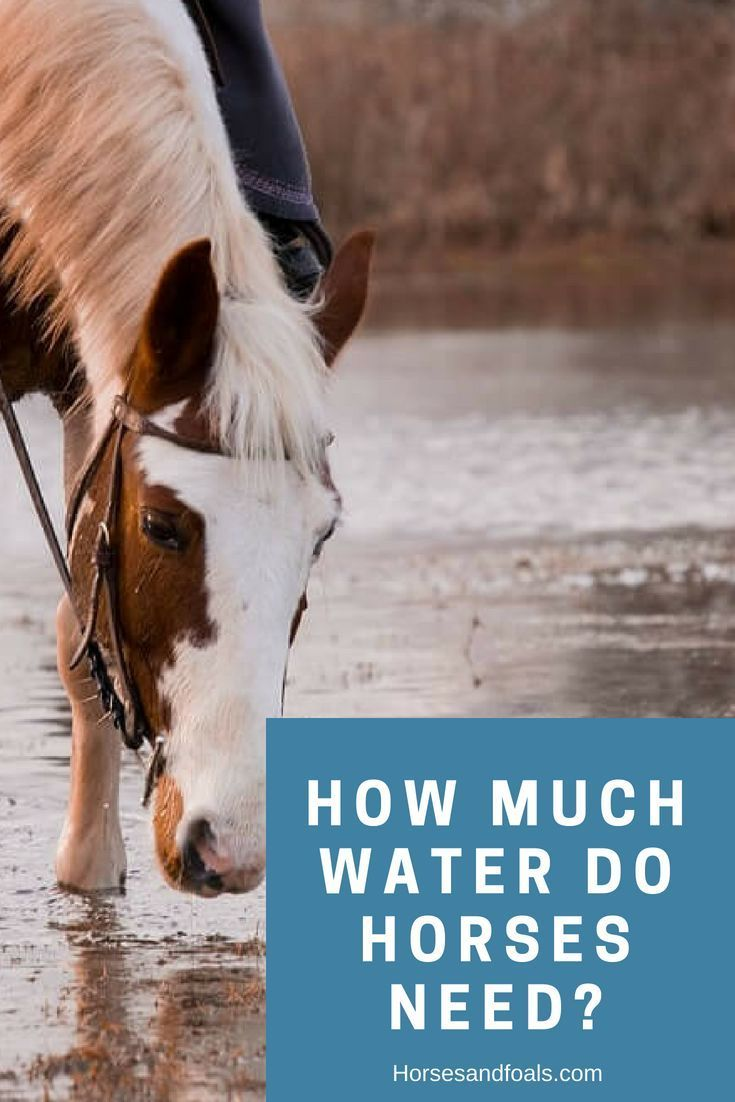 How much water do horses need horses horse care horse