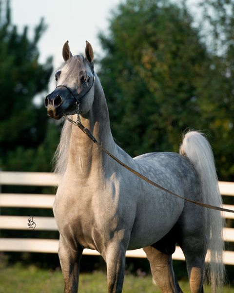 Pin by Global Horse Cents on Horses | Horses, Beautiful ... - photo#26