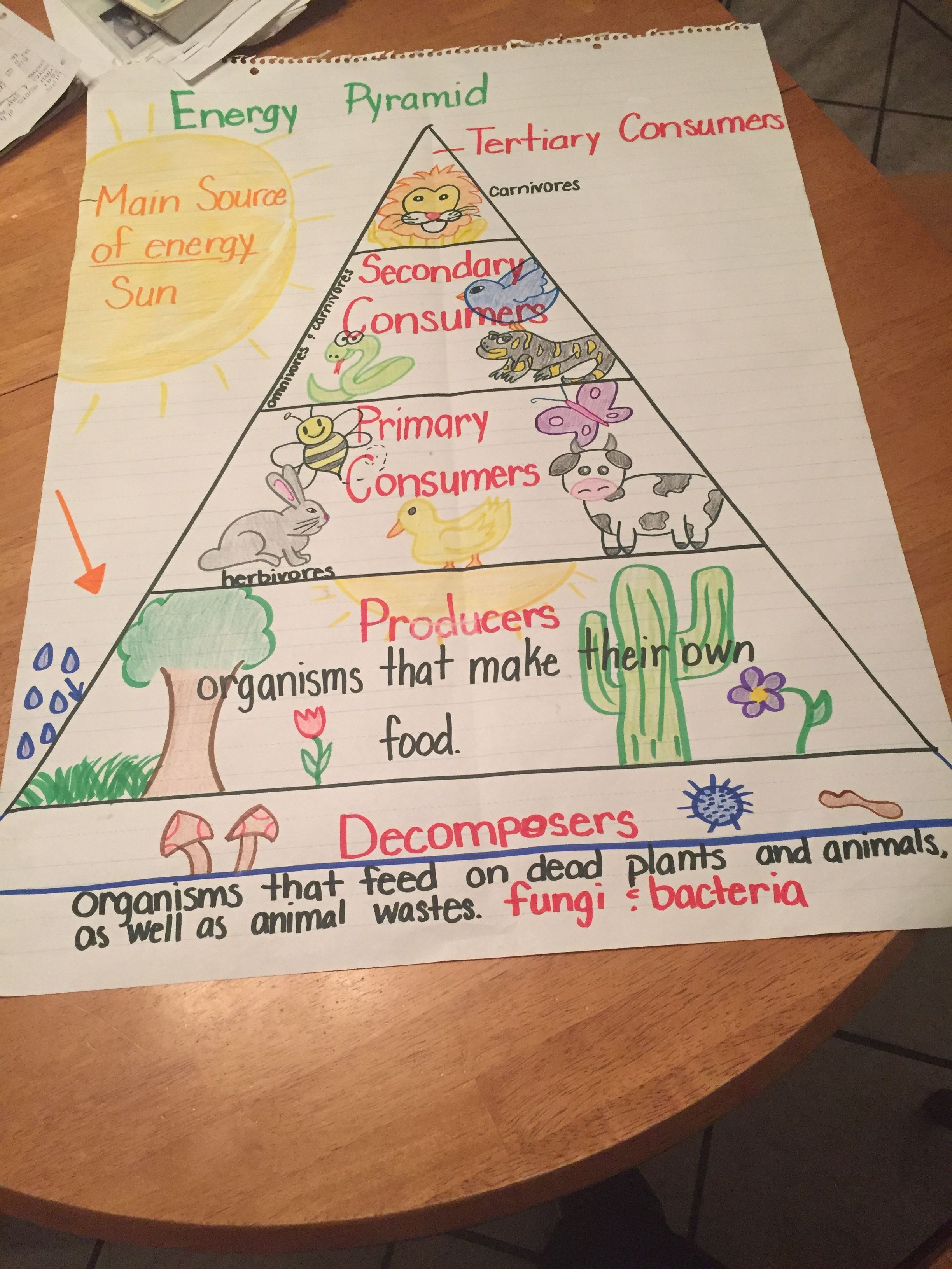 hight resolution of Food chain energy pyramid. 5th grade   5th grade science