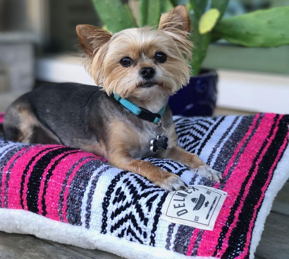 Classic Baja Blanket Dog BedFuchsia Dog bed, Dogs, Pet beds