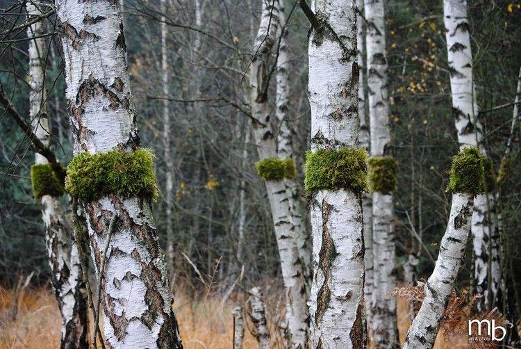 Tree Trunks Moss by Land artist Miha Brinovec.