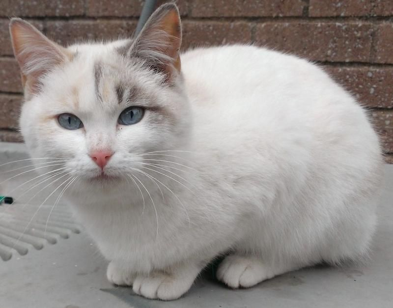 Adopt Daisy Wood Oaks On Pet People Cats And Kittens Cat Adoption