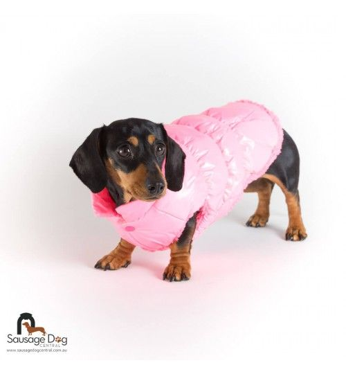 Pin by Emily Challis on Dog Dachshund clothes, Puffer